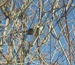 bird1_1