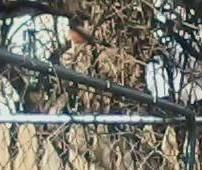 robin-fence